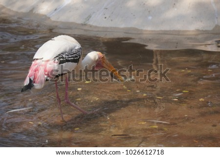 Shutterstock Cranes are a family, Gruidae, of large, long-legged and long-necked birds in the group Gruiformes. There are fifteen species of crane in four genera.