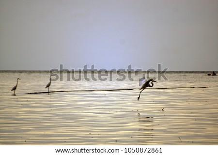 Shutterstock Cranesare a family,Gruidae, of large, long-legged and long-neckedbirdsin the groupGruiformes.