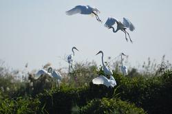 Cranes gathering in Djoudj National Bird Sanctuary in Senegal