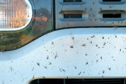 Crashed insect on car bumper. Crush the mosquitoes and gnats at the front of the vehicle