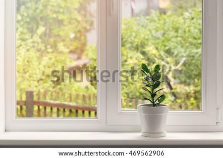 crassula flower in pot on windowsill - Shutterstock ID 469562906