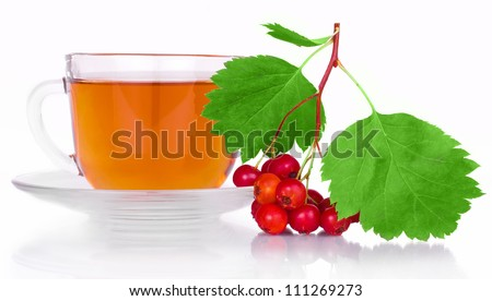 Crataegus tea with herbs and berries of the hawthorn with bright green leaves in a clear plastic Cup with saucer isolated on white background
