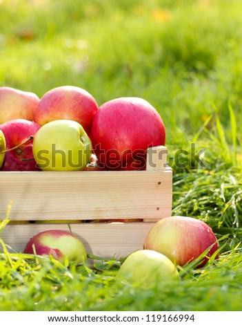 crate of fresh ripe apples in garden on green grass