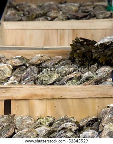 Crates of fresh oysters for sale at a market