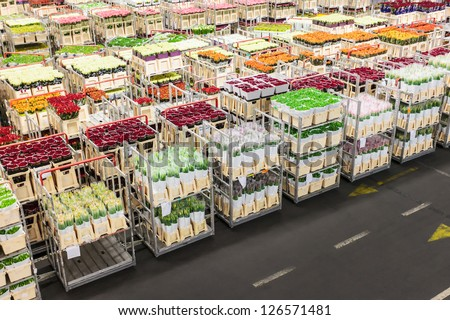 Crates with flowers ready for sale on a Dutch flower auction