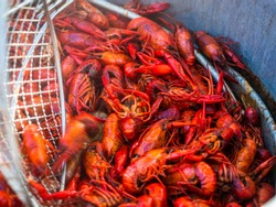 crawdad on the boil in a pot being scooped
