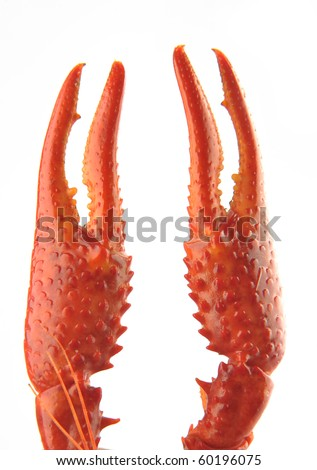 crawfish Claw on a white background