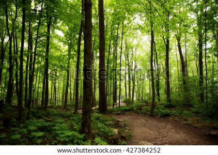 Crawford Lake Milton Ontario woods path