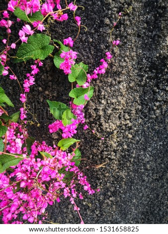 Crawling flowers with beautiful vibrant color.
