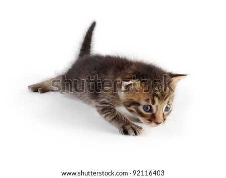 crawling grey tabby kitten, isolated on white