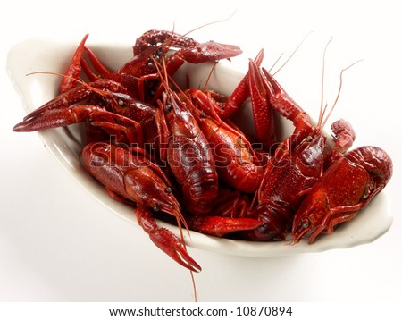 crayfish on the white