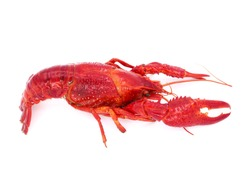 Crayfish or Crawfish isolated on white background.