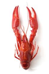 Crayfish or Crawfish isolated on white Plate