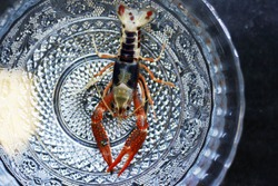 Crayfish shrimp are moving in the water. Inside the bowl is made of beautiful patterned silver.