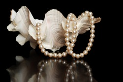 cream colored pearls in a sea shell