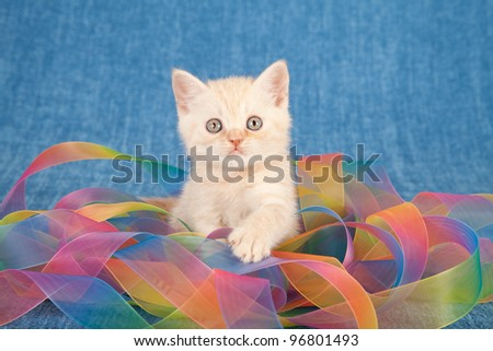 Cream kitten wrapped in colorful tie dye ribbons on blue background
