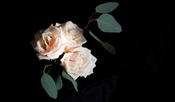 Cream roses and eucalyptus. Delicate flower arrangement on a black background. Low key photography. Copy space