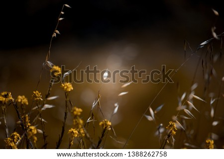 Creamy background with flowers in the wind  #1388262758