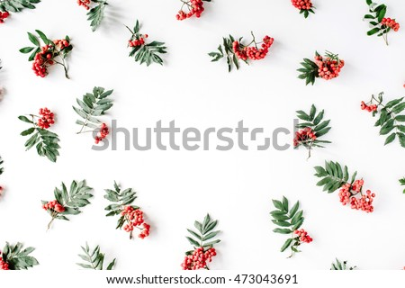 Creative arrangement made of rowan. frame, flat lay, top view. autumn wallpaper