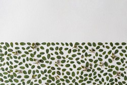 Creative arrangement made with green leaves on bright background. Minimal nature love idea. Spring concept.