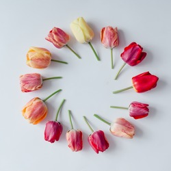 Creative arrangement of tulip flowers on bright background. Flat lay.