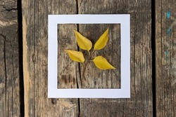 Creative autumn layout concept with white hollow paper square and yellow leaves against bright wooden background. Top view.