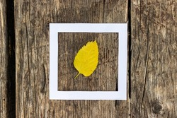 Creative autumn layout with yellow leaf and hollow white paper square against wooden background. Top view.