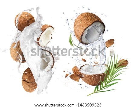 Creative Collection set with Flying in air fresh ripe whole and cracked coconut with milk splashes  isolated on white background. Food levitation concept. High resolution image, 3d concept #1463509523
