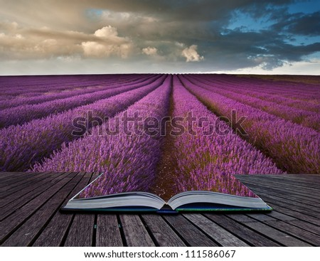Creative composite image of Summer lavender landscape in pages of magic book