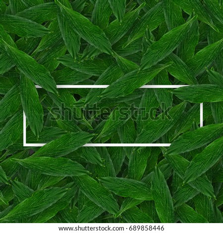 Creative concept idea layout made of leaves with white space in centre. Flat lay. Nature concept. copy space. minimal style #689858446