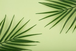 Creative elegant pastel green background with palm leaves. Flat lay with palm leaf in diagonal on light green background with space for text. Concept of abstract modern tropical background