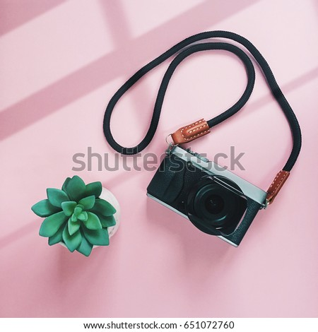 Creative flat lay style of camera and green plant on pink background with window light, minimal style