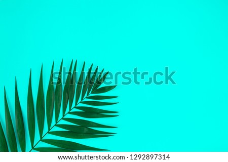 Creative flat lay top view of green tropical palm leaves on color paper background with copy space. Minimal tropical palm leaf plants summer concept template for your text or design #1292897314