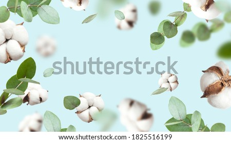 Creative Floral background with cotton. Frame made of Flying cotton flowers, green twigs of eucalyptus on blue background, delicate flowers of fluffy cotton. Flat lay flowers composition greeting card