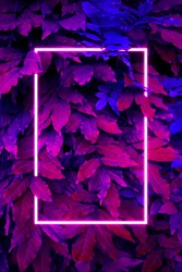 Creative fluorescent color layout. Neon light flat square frame on leaves background in dark colors, fluorescent color palette copy space for banner, poster, card, sale advertisement, party invitation