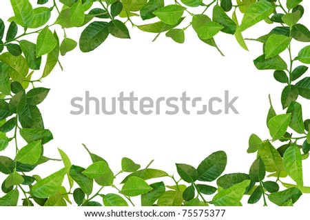 creative frame made of spring leaves  isolated on white