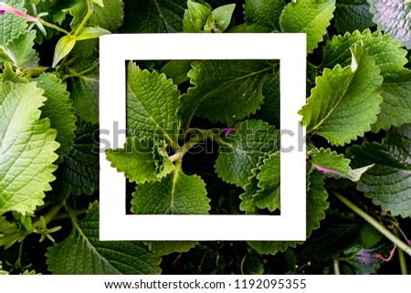 creative idea of exotic flowers pattern with copy space made of square frame flat lay #1192095355