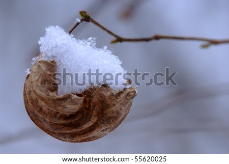 Creative idea shot of leaf with snow as a ship