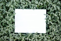 Creative layout frame made of grass with first frost and green leaves with paper card note, flat lay, nature concept top view