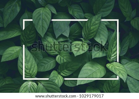 creative layout, green leaves with white square frame, flat lay, for advertising card or invitation #1029179017