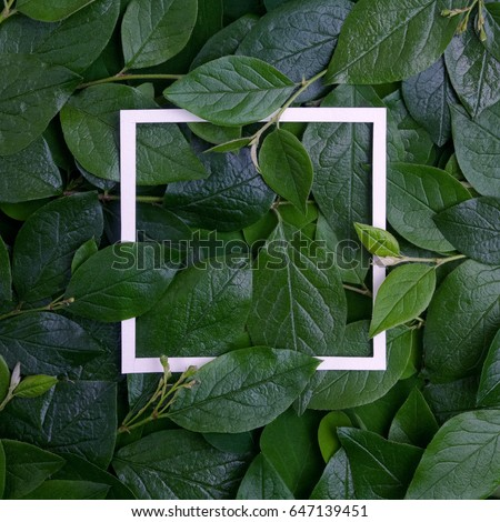 Creative layout made leaves with white paper frame. Flat lay. Nature concept #647139451