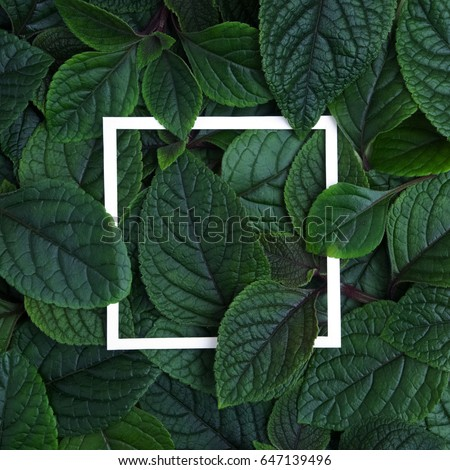 Creative layout made leaves with white paper frame. Flat lay. Nature concept #647139496