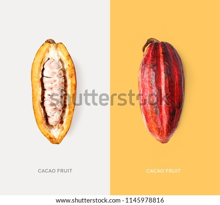 Creative layout made of cacao fruit on the white background. Flat lay. Food concept. Macro  concept.