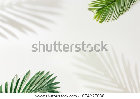 Creative layout made of colorful tropical leaves on white background. Minimal summer exotic concept with copy space. Border arrangement. #1074927038