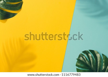 Creative layout made of colorful tropical leaves on yellow and blue background. Minimal summer exotic concept with copy space. Border arrangement.