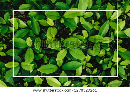 Creative layout made of flowers and leaves with paper card note. Flat lay. Nature concept #1298329261