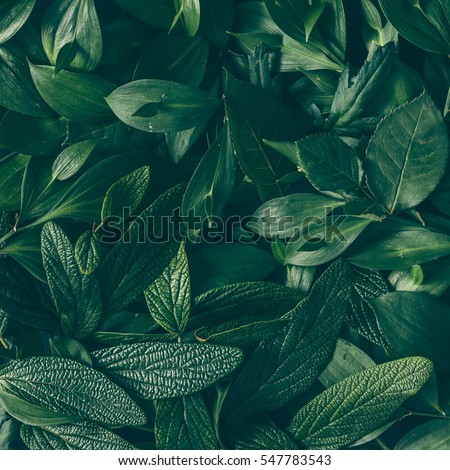 Creative layout made of green leaves. Flat lay. Nature background #547783543