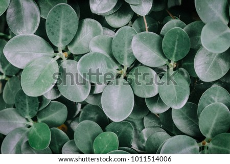 Creative layout made of green leaves. Flat lay. Nature concept #1011514006