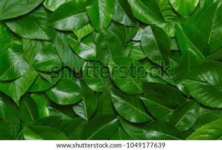 Creative layout made of green leaves. Flat lay. Nature concept #1049177639