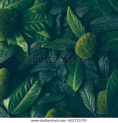 Creative layout made of green leaves. Flat lay. Nature concept - Shutterstock ID 602723795